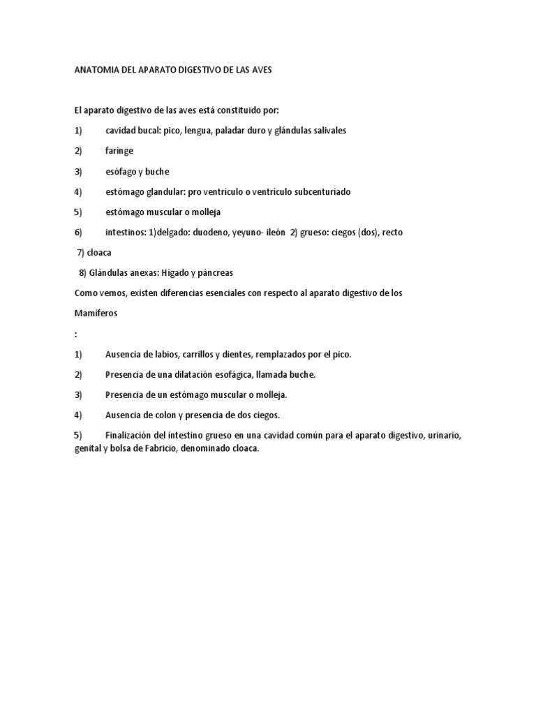 Anatomia Del Aparato Digestivo de Las Aves