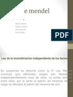 3 Ley de Mendel