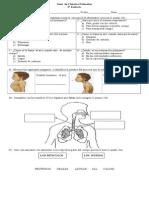 Guía evaluada del sistema respiratorio