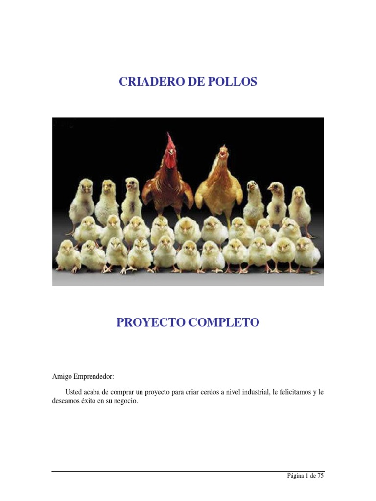 Manual cria de pollos de engorde for Manual cria de cachamas