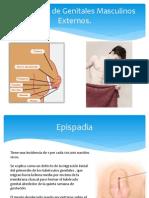 Patologías de Genitales Masculinos Externos