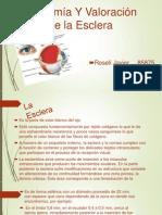 Anatomía Y Valoración de la Esclera