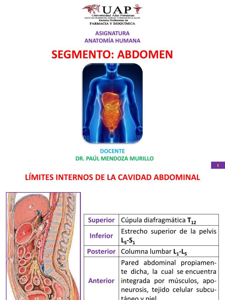 Moderno Anatomía Abdomen Inferior Humana Bandera - Imágenes de ...