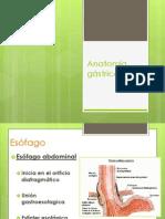 Anatomía gástrica