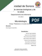 Pediculosis (Ensayo)