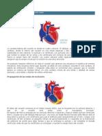 Anatomía y fisiología del corazón sano