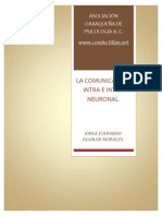 comunicacion_intraneuronal_interneuronal