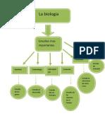 biologia mapa conceptual procesador de textos