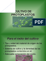 CULTIVO DE PROTOPLASTOS