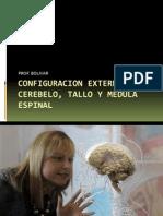 Configuracion Externa Del Cerebelo, Tallo, Me (1)