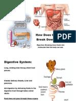 Digestion 2