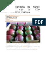 Actual campaña de mango acumula más de 1000 contenedores enviados