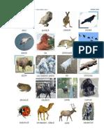 cartonase-animale