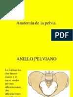 2 Anatomia de La Pelvis