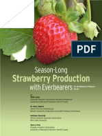 Everbearing Strawberry Guide