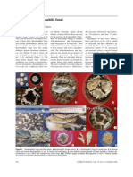 Relevance of Keratinophilic Fungi