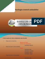 Presentation RASE OVINE 2003