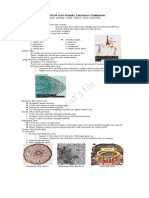12 Struktur Dan Fungsi Jaringan Tumbuhan1