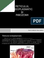 Reticulul endoplasmatic