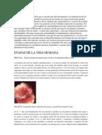 El Desarrollo Humano y Etapas Del Desarrollo Humano