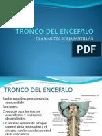 Repaso Neuroanatomia Dra. Maritza Borja s.