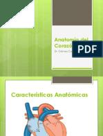Anatomía del Corazón Fisio Lab.pptx