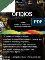 Ofidios Veracruzanos Citver