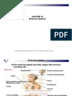 Chapter 50 Endocrine System