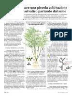 [Gardening] Vita in Campagna 2008-11 (26-29) - Come Realizzare Una Piccola Coltivazione Di Asparago Selvatico Partendo Dal Seme