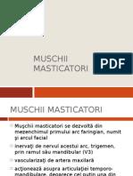 MUSCHII MASTICATORI