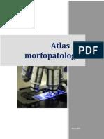 Atlas de Morfopatologie