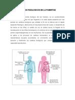 Cambios Fisiologicos en La Pubertad