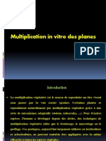 Cour 1 de Multiplication in Vitro