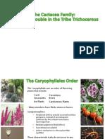 Trichocereus Taxonomy Powerpoint