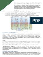 ATP2_Receptores_cataliticos (1)