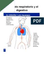 Ciencias Naturales - Los Aparatos Digestivo y Respiratorio