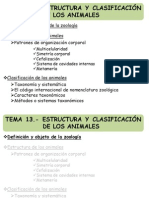13_estructura y Clasificacion Animal_MM