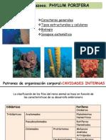 14 Parazoos Phylum Porifera MM