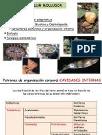 17 Phylum Mollusca MM