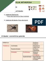 20_Artropodos I. Quelicerados y Miriapodos