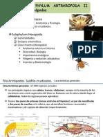 21_ Crustaceos y Hexapodos