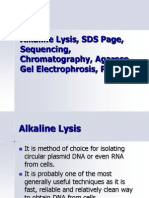 Alkaline Lysis, SDS Page,Sequencing, Chromatography,