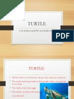 elena martín nº 14 turtle.pptx