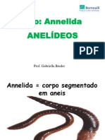 Anelídeos - anatomia e classificação