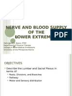 Nerve and Blood Supply_LE