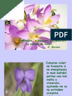 Culoarea Violet