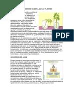 Absorcion de Agua en Las Plantas - Ecologia Forestal