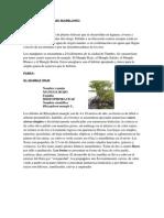 Flora y Fauna de Los Manglares