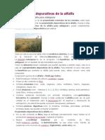 Propiedades Depurativas de La Alfalfa