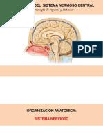 Embriología del Sistema Nervioso Central